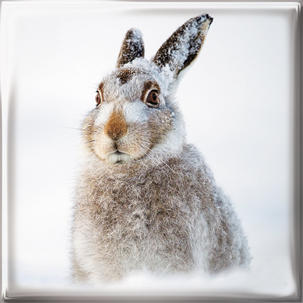Mountain Christmas Cards.Medici Cards Mountain Hare Pack Of 12 Christmas Cards