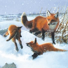 Museums and Galleries Foxes in the Snow Pack of 5 Charity Christmas Cards