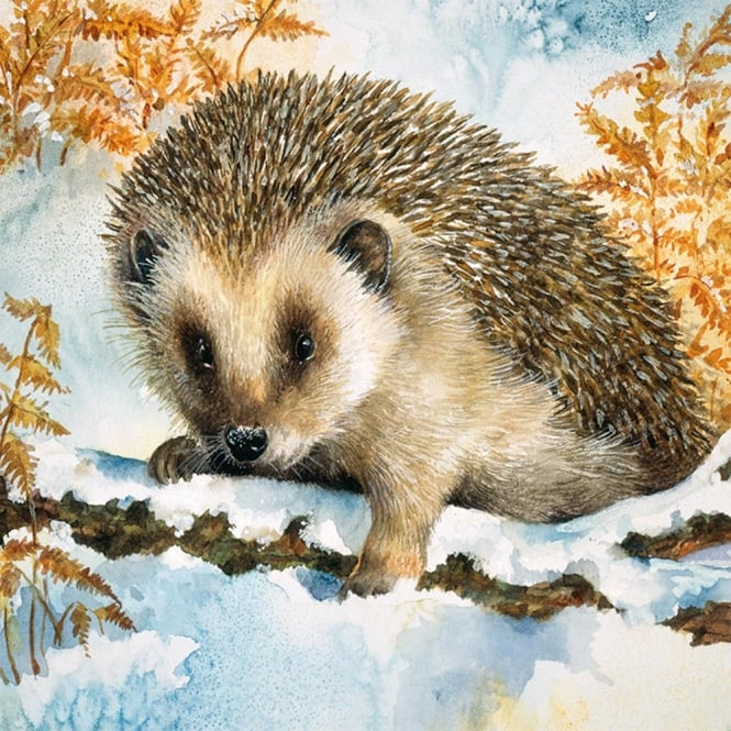 museums and galleries hedgehog in the snow pack of 5 charity christmas cards - Animal Charity Christmas Cards